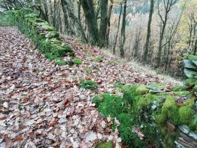Cwmogwr Forest Wall pre